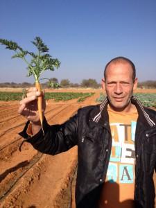 Gemüseanbau 3